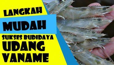 Budidaya Udang Vaname